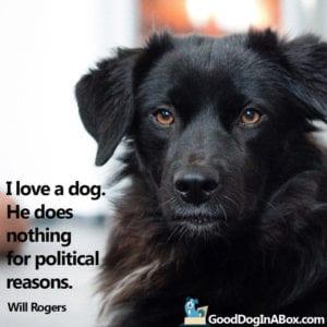 Dog Pictures Black Dog