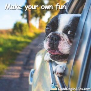 Boston Terrier Dog Quotes
