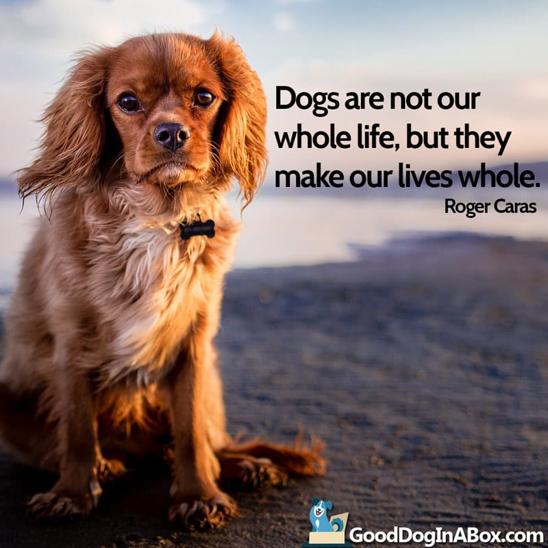Dog Love Quotes Beauteous Dogs Love Quotes By Roger Caras From Good Dog In A Box