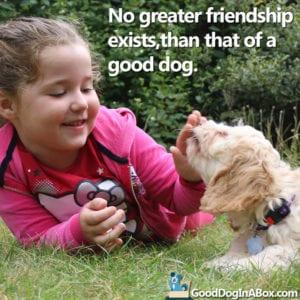 Dog Quotes Golden Retriever Puppy