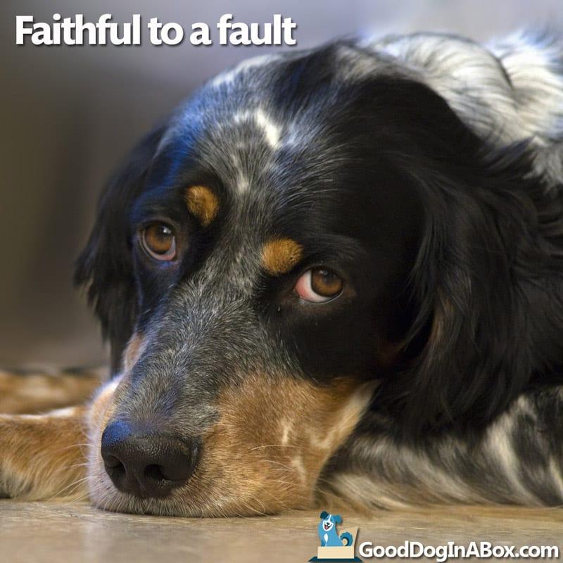 Dog Quotes Spaniel