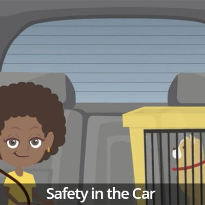 Being a Responsible Pet Owner Video Series: Safety in the Car