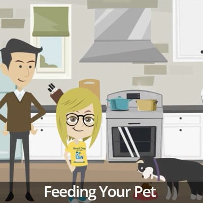 Being a Responsible Pet Owner Video Series: Feeding Your Pet