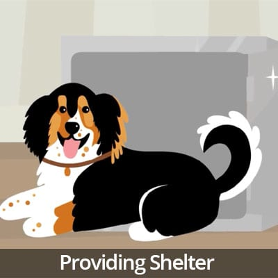 Being a Responsible Pet Owner Video Series: Providing Shelter