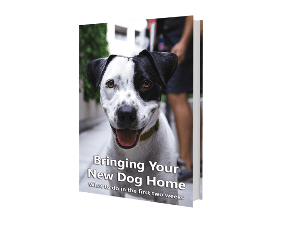 Bringing Your New Dog Home eBook
