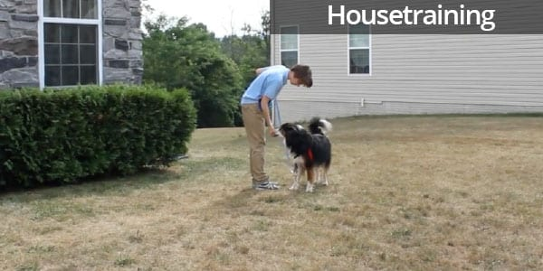 Housetraining a New Dog