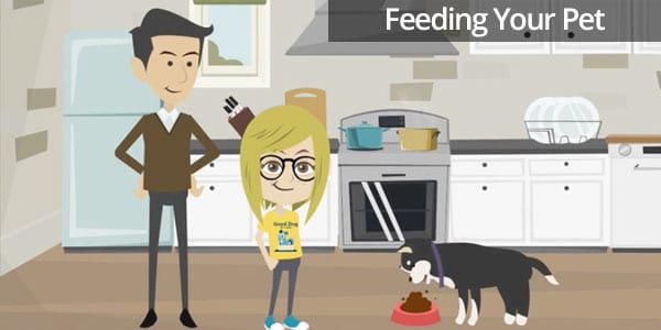How to Feed Your Pet
