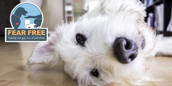Fear Free Pet Professionals