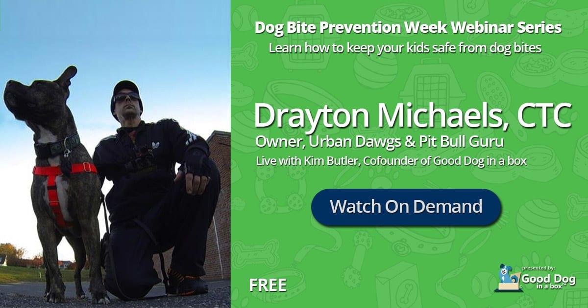 Free Dog Training Webinar