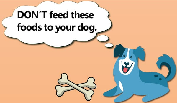 Don't Feed Your Dog These Foods