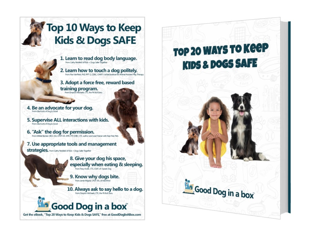 10 & 20 Ways to Keep Kids and Dogs SAFE Downloads