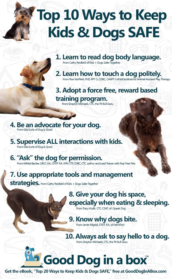 Top 10 Ways to Keep Kids & Dogs SAFE