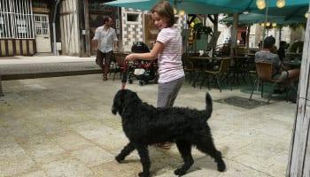 Kids Training Dogs