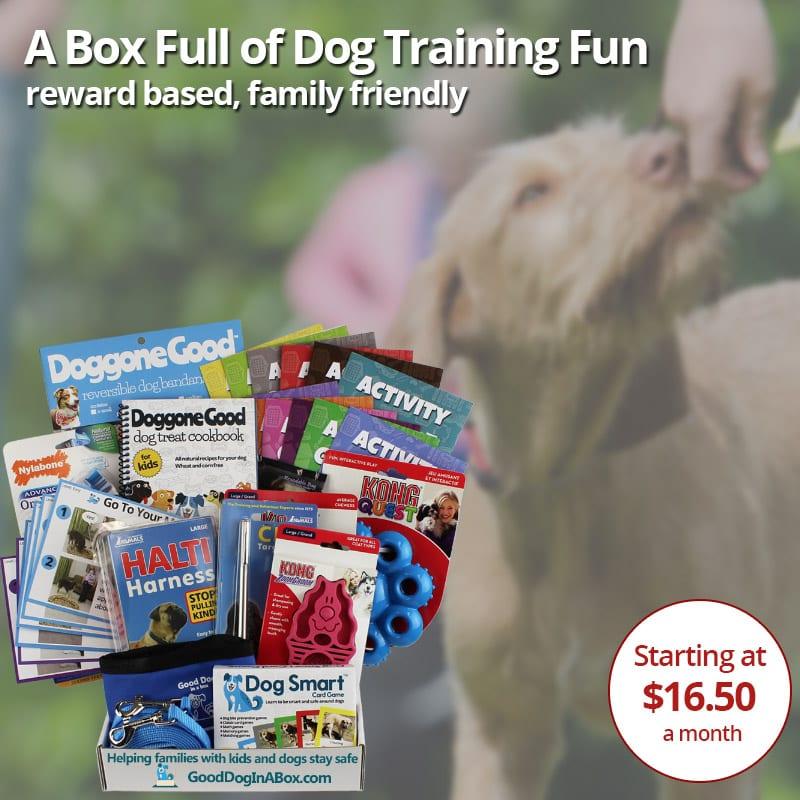 Family Friendly Dog Training Program